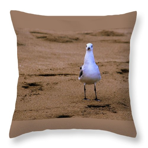 Florida Throw Pillow featuring the photograph Laughing Gull 004 by Larry Ward