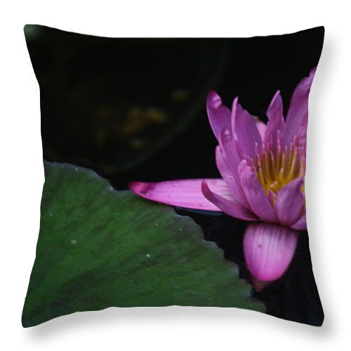 Purple Throw Pillow featuring the photograph Lavendar Water Lily by Donna Walsh