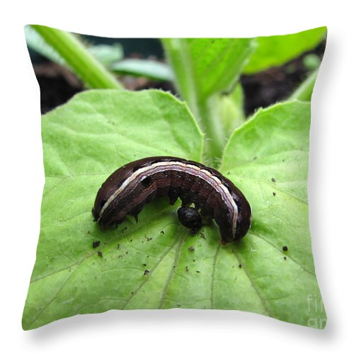 Lavender And Cream Caterpillar Prints Purple Caterpillar Prints Colorful Caterpillar Prints Bird Dropping Mimic Caterpillar Images Entomology Biodiversity Conservation Forest Ecology Intelligent Design Nature Critter Prints Insects Throw Pillow featuring the photograph Lavender And Cream by Joshua Bales
