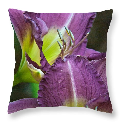 Lilies Throw Pillow featuring the photograph Lavender Beauties by Douglas Barnett