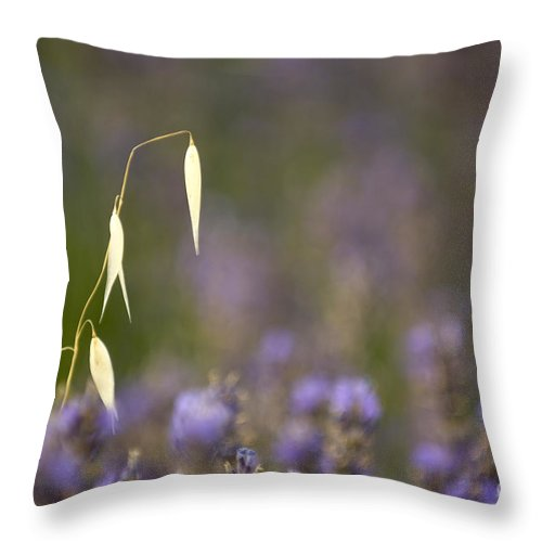 Lavender Throw Pillow featuring the photograph Lavender, France by John Shaw