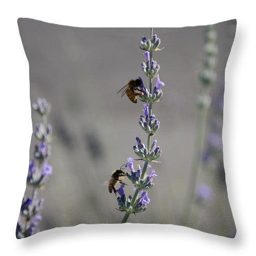 Bee Throw Pillow featuring the photograph Lavender Rest Stop by Joie Cameron-Brown