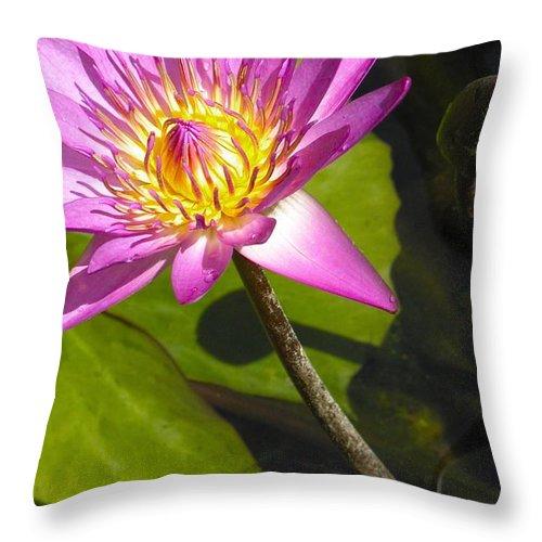Lavillita Throw Pillow featuring the photograph Lavillita_flower 10116 by Jerry Sodorff