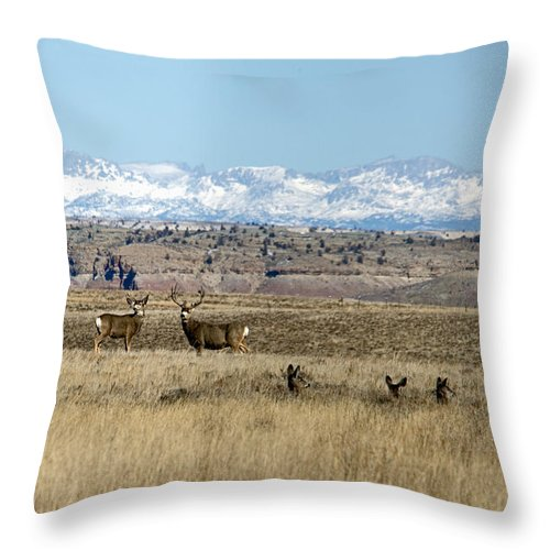 Landscape Throw Pillow featuring the photograph Layered Bucks by Eric Nelson