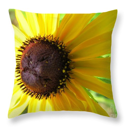 Flower Throw Pillow featuring the photograph Lazy Susan Flower Variety by Tina M Wenger