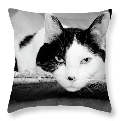 Andee Design Cat Throw Pillow featuring the photograph Le Cat by Andee Design
