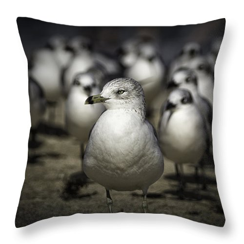 Gulls Throw Pillow featuring the photograph Leader Of The Band by Fran Gallogly