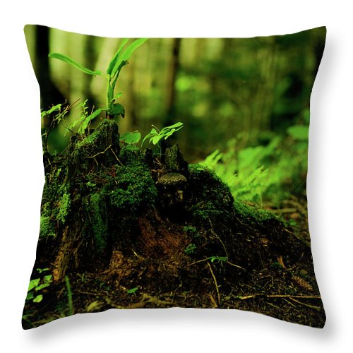Hokkaido Throw Pillow featuring the photograph Leaf Bud by Plasticboystudio