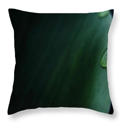 Leaf Throw Pillow featuring the photograph Leaf Drop by Aza Johnson