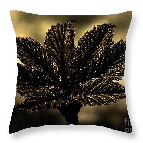 Leaf Throw Pillow featuring the photograph Leaf In A Special Light by Four Hands Art
