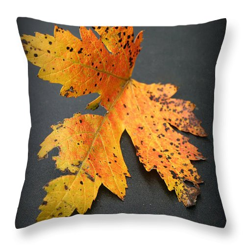 Nature Throw Pillow featuring the photograph Leaf Portrait by Linda Sannuti