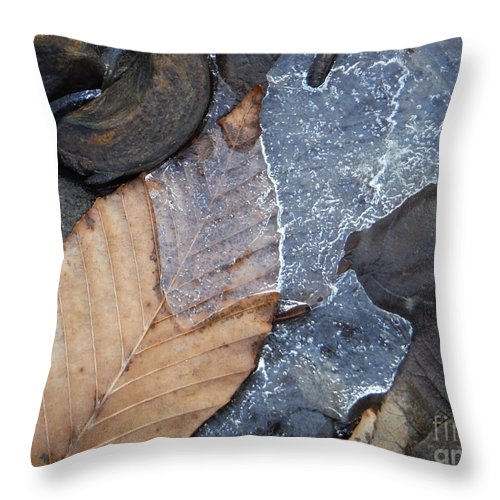 Leaf Series 42 Throw Pillow featuring the photograph Leaf Series 42 by Paddy Shaffer