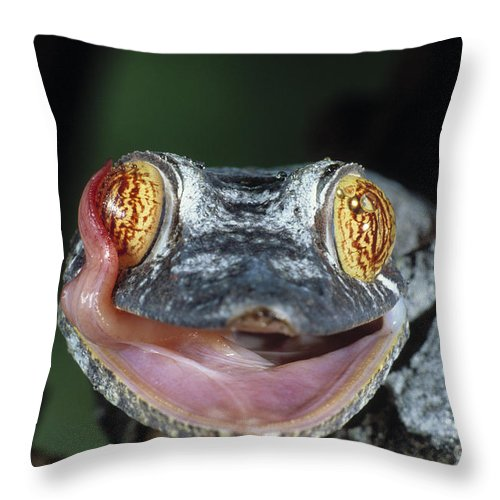 Leaf-tailed Gecko Throw Pillow featuring the photograph Leaf-tailed Gecko Uroplatus Henkeli by Stephen Dalton