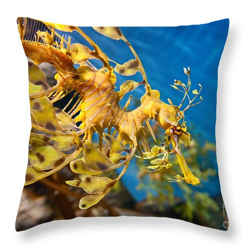 Animals Throw Pillow featuring the photograph Leafy Sea Dragon Phycodurus Eques. by Jamie Pham