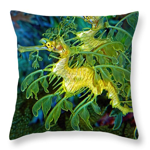 Seadragons Throw Pillow featuring the photograph Leafy Sea Dragons by Donna Proctor