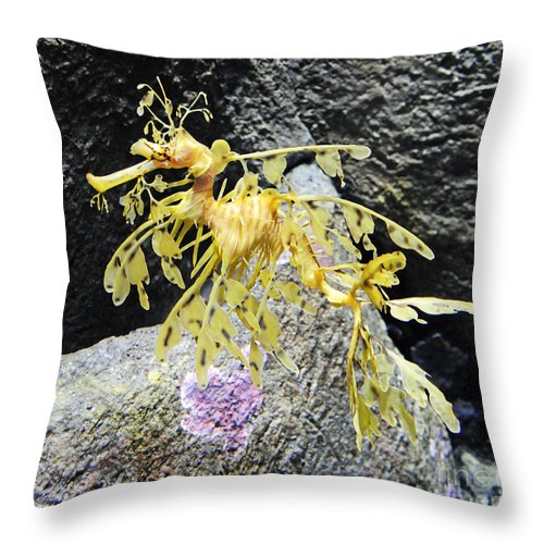 Leafy Seadragon Throw Pillow featuring the photograph Leafy Seadragon by Vivian Christopher