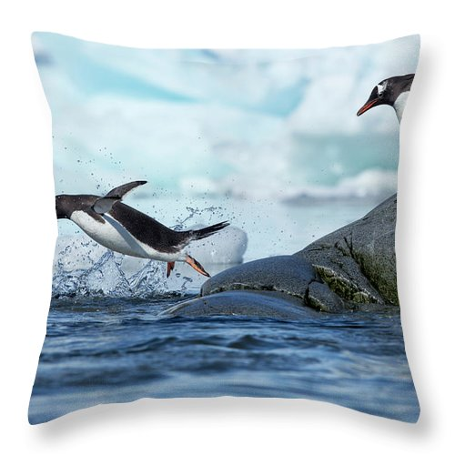 Water's Edge Throw Pillow featuring the photograph Leaping Gentoo Penguins, Antarctica by Paul Souders
