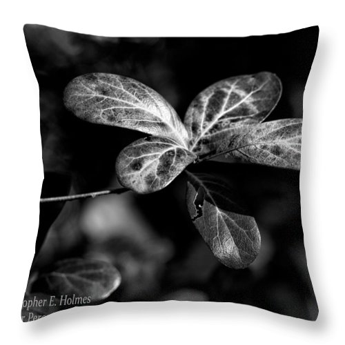 Christopher Holmes Photography Throw Pillow featuring the photograph Leaves - Bw by Christopher Holmes