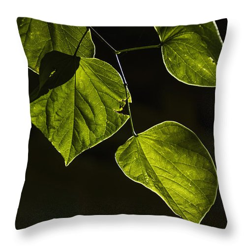 Leaf Throw Pillow featuring the photograph Leaves by Margie Hurwich