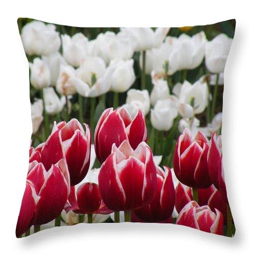 Tulip Throw Pillow featuring the photograph Leen Van Der Mark Tulips by David Quist