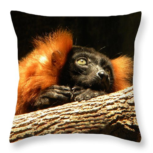 Lemur Throw Pillow featuring the photograph Lemur In Longing by Phillip W Strunk
