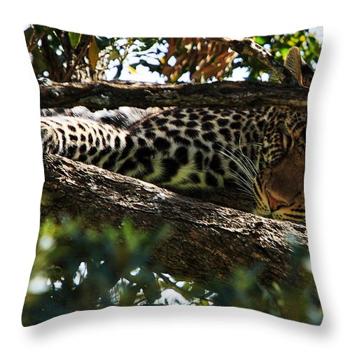 Leopard Throw Pillow featuring the photograph Leopard In A Tree by Aidan Moran
