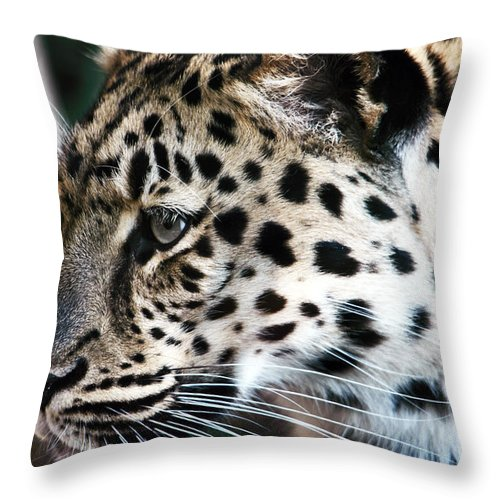 Wildlife Throw Pillow featuring the photograph Leopard by John Rizzuto