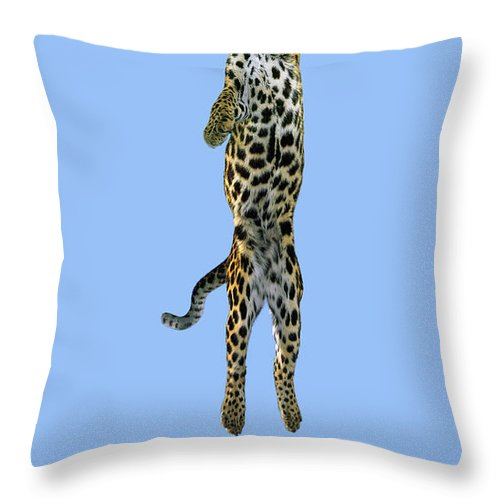 Leaping Throw Pillow featuring the photograph Leopard Panthera Pardus by Stephen Dalton