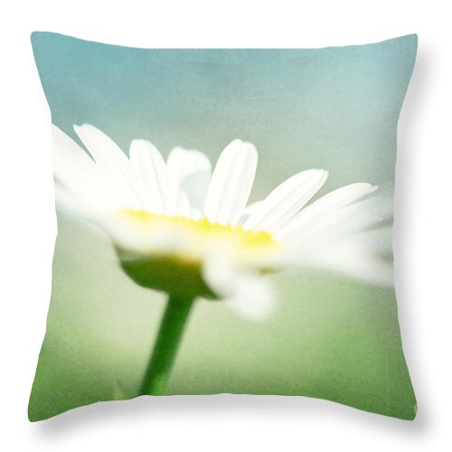 Daisy Throw Pillow featuring the photograph Let The Sunshine In by Kim Fearheiley