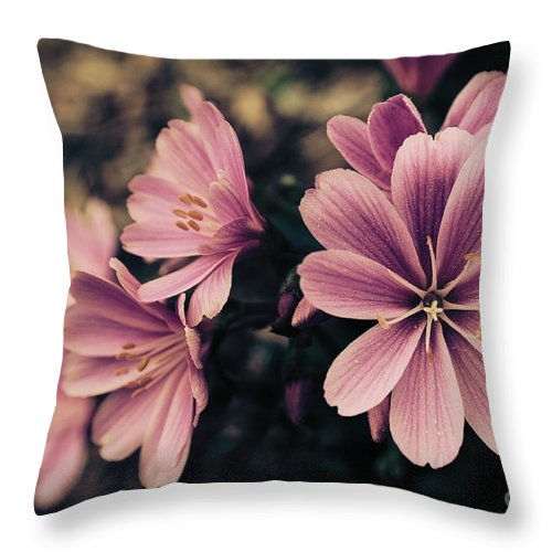 Lewisia Throw Pillow featuring the photograph Lewisia Flowers - 7 by Kenny Glotfelty