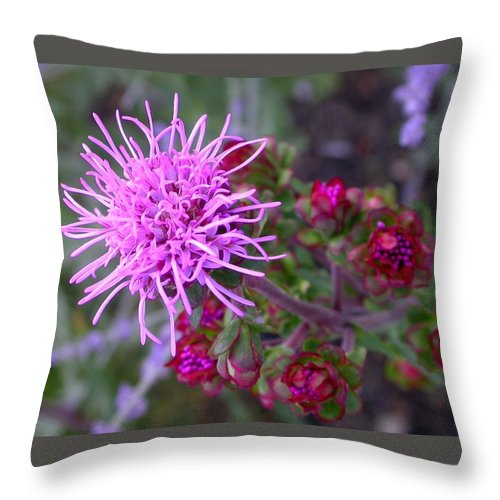 Throw Pillow featuring the photograph Liatris Ligulistylis Bunch by Cynthia Wallentine