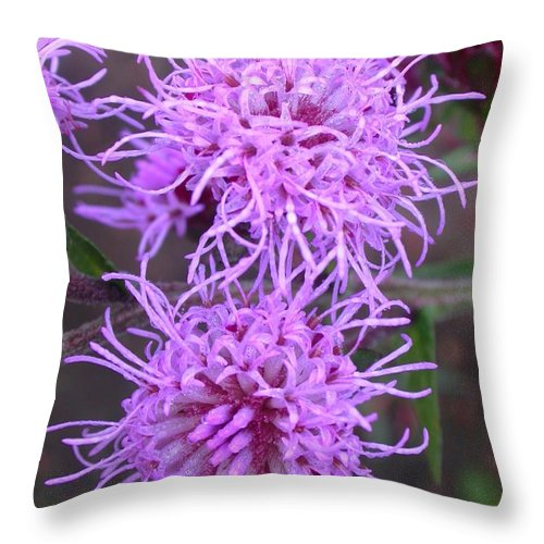 Throw Pillow featuring the photograph Liatris Ligulistylis Duo by Cynthia Wallentine
