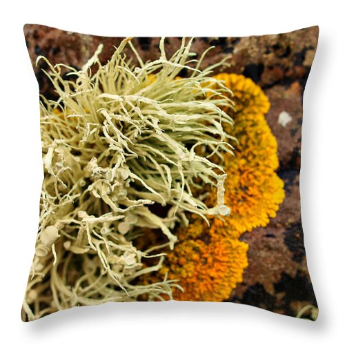 Seaweed Throw Pillow featuring the photograph Lichen And Weed by Michaela Perryman