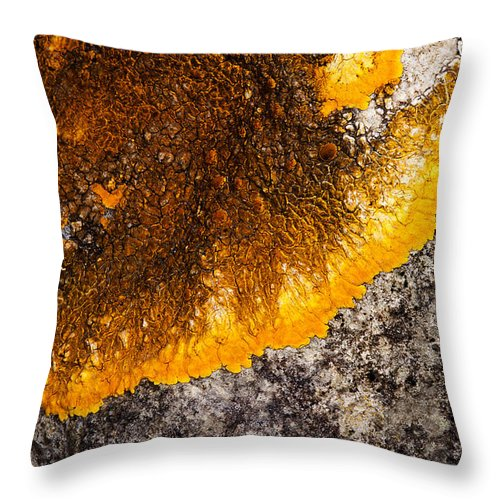 Lichens Throw Pillow featuring the photograph Lichen It by Bob Kemp