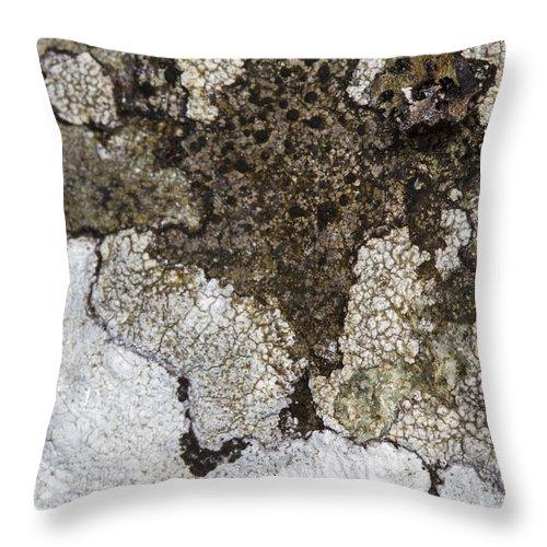 Lichen Throw Pillow featuring the photograph Lichen Mosaic by Bob Kemp