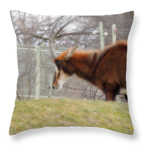 Life Throw Pillow featuring the photograph Life Review by Munir Alawi
