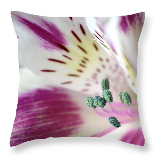 Alstroemeria Throw Pillow featuring the photograph Lifetime Friendships by Deb Halloran