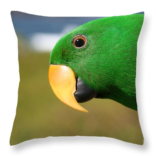 Aloha Throw Pillow featuring the photograph Light Of Love - Eclectus Parrot by Sharon Mau