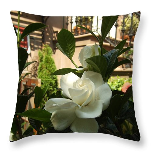 Throw Pillow featuring the photograph Like A Rose by Katerina Naumenko
