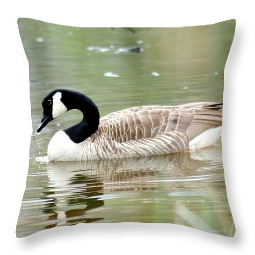 Canadian Goose Throw Pillow featuring the photograph Lila Goose Queen Of The Pond 2 by Lesa Fine