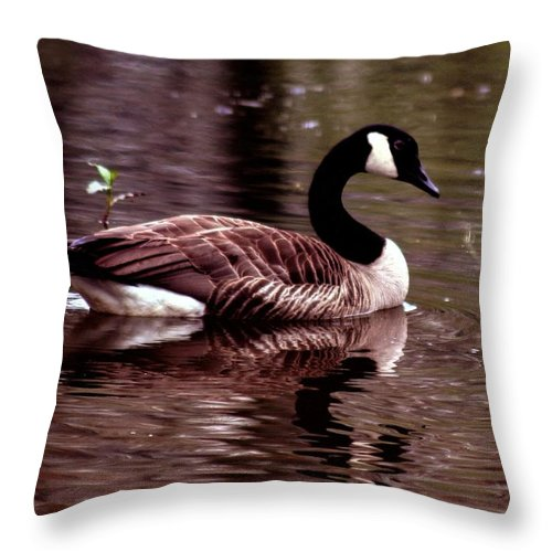 Canadian Goose; Canadian Geese; Geese; Goose; Water Throw Pillow featuring the photograph Lila Queen Of The Pond by Lesa Fine