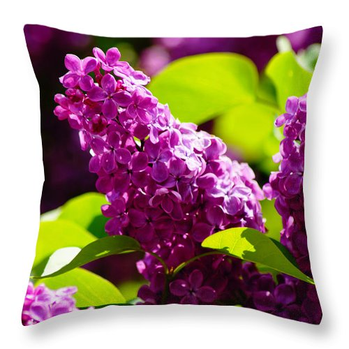 Lilac Throw Pillow featuring the photograph Lilac Bloom by Anita Braconnier