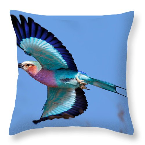 Lilac-breasted Throw Pillow featuring the photograph Lilac-breasted Roller In Flight by Johan Swanepoel