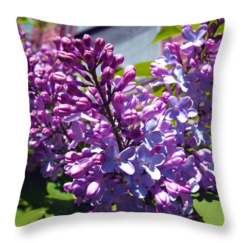 Floral Throw Pillow featuring the photograph Lilacs by Barbara McDevitt