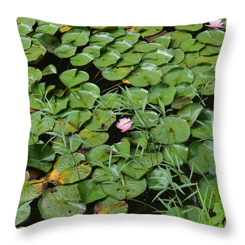 Lotus Throw Pillow featuring the photograph Lilly Pads by Lj Lambert