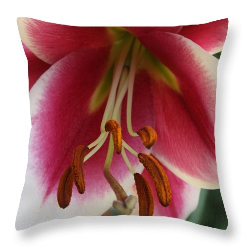 Lily Throw Pillow featuring the photograph Lily Macro by Christiane Schulze Art And Photography