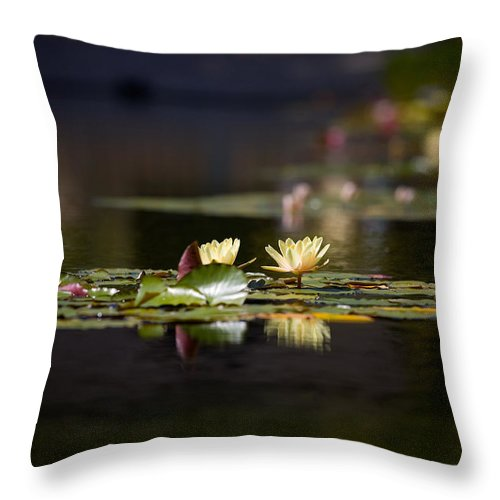 Waterlily Throw Pillow featuring the photograph Lily Pond by Peter Tellone