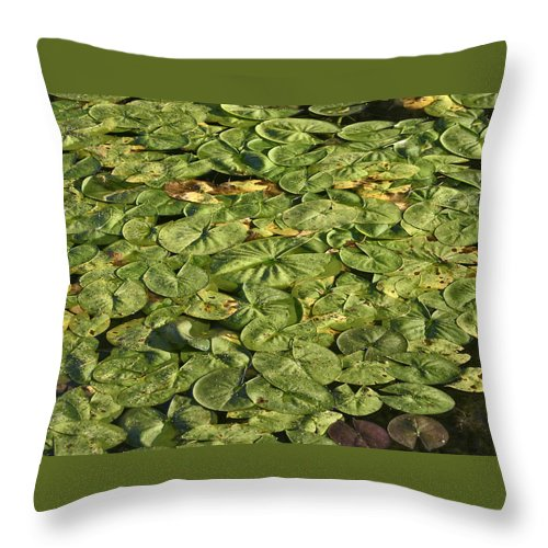 Water Throw Pillow featuring the photograph Lily Pond by Wendy Raatz Photography
