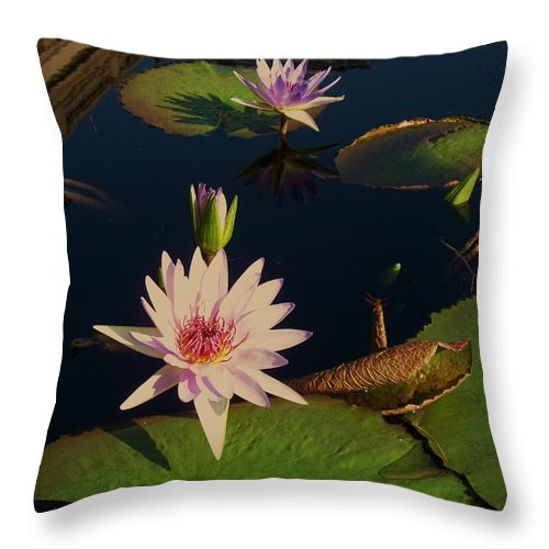 Photograph Throw Pillow featuring the photograph Lily White Monet by Eric Schiabor