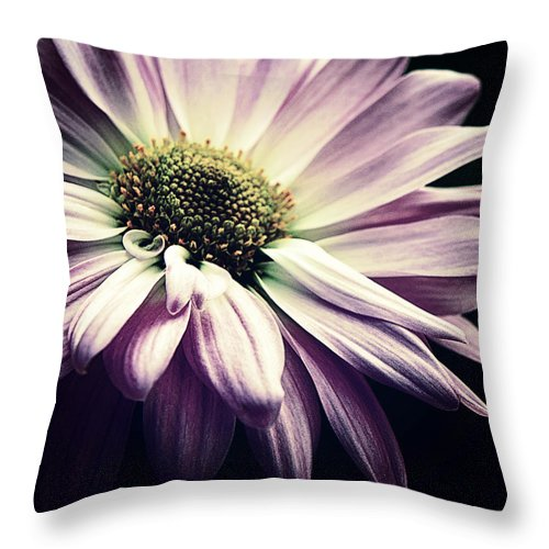 Floral Throw Pillow featuring the photograph Limelight by Darlene Kwiatkowski